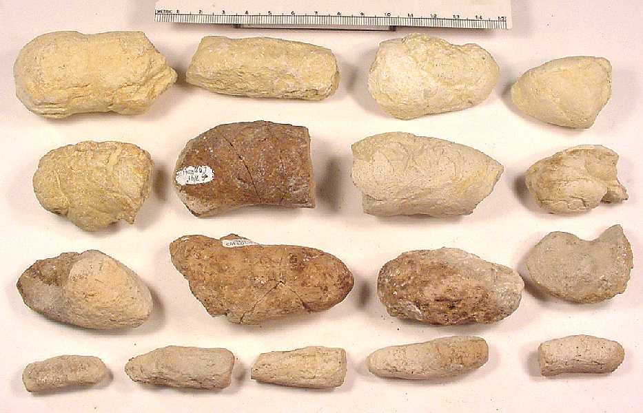Coprolite discovered weathering from the chalk logan county late