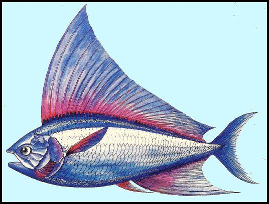 http://www.oceansofkansas.com/FossilFish/Bananogmius/RexB%20Banog2.jpg