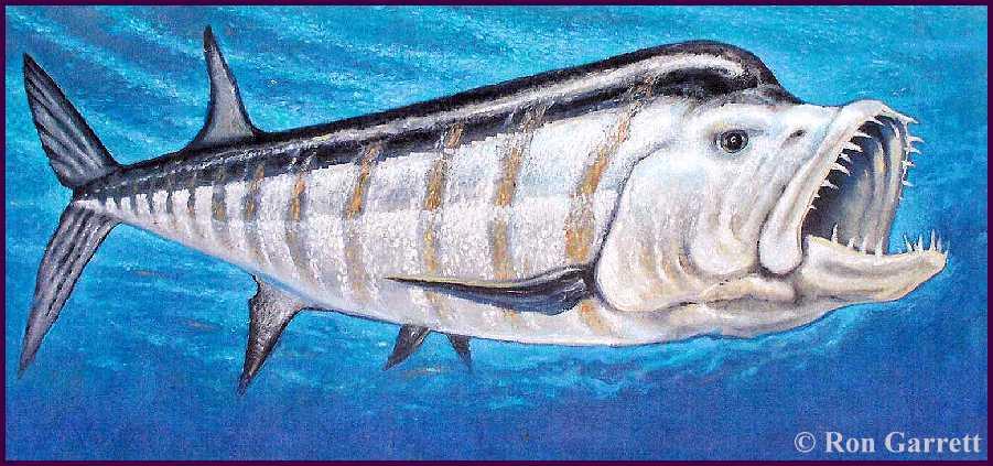 xiphactinus fish - 901×423