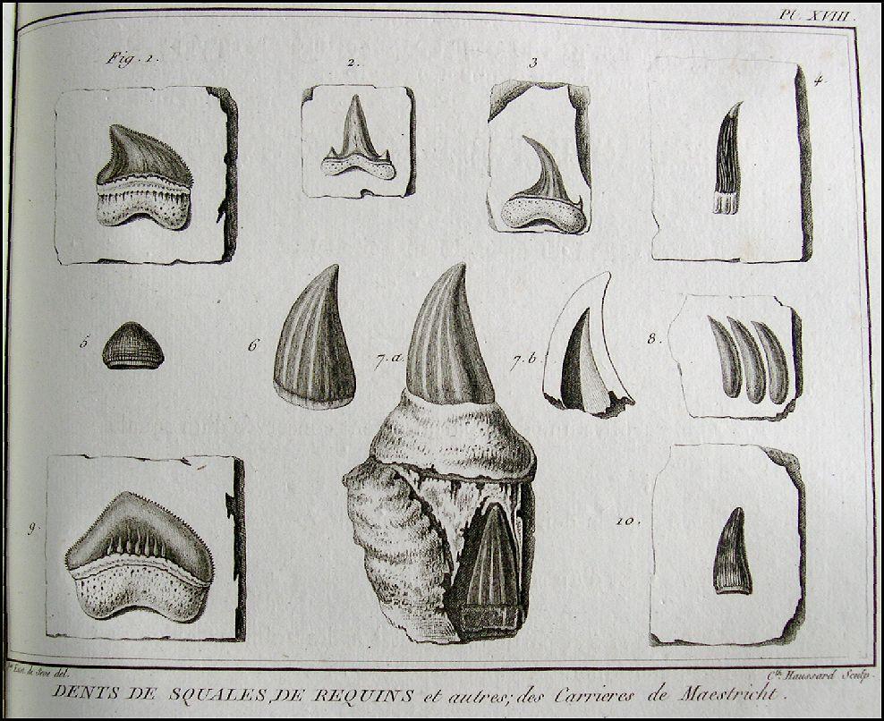 Animal Teeth Drawing The Teeth However Were