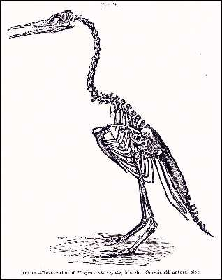 marhesa.jpg (17484 bytes)