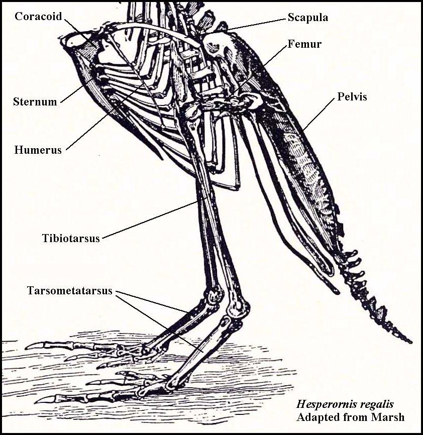 Quia - Class Page - Ornithology