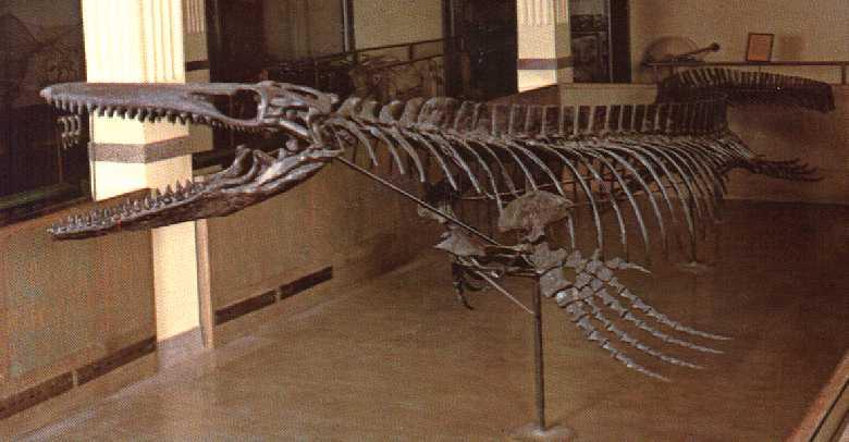 http://oceansofkansas.com/Mosasaurs2/mos-con.jpg
