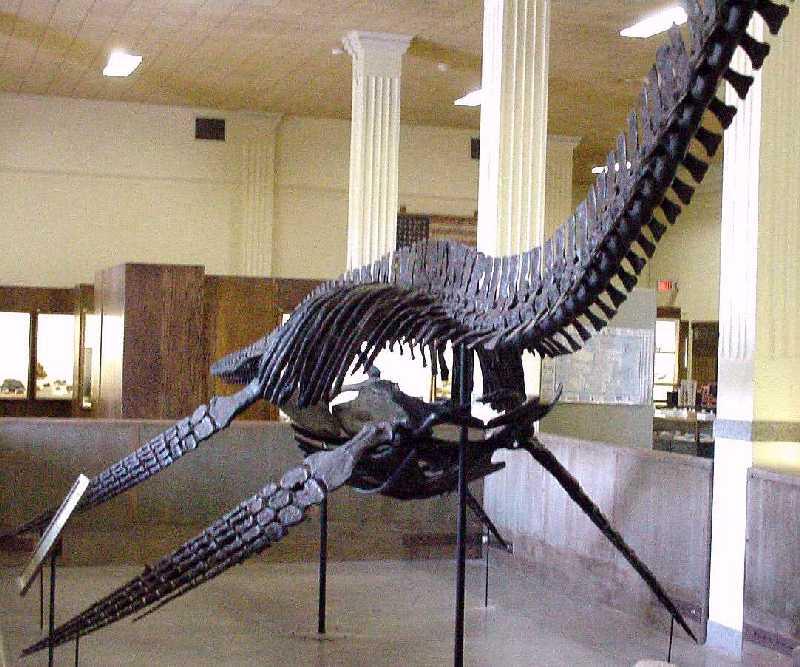 Elasmosaurus Skeleton Styxosaurus