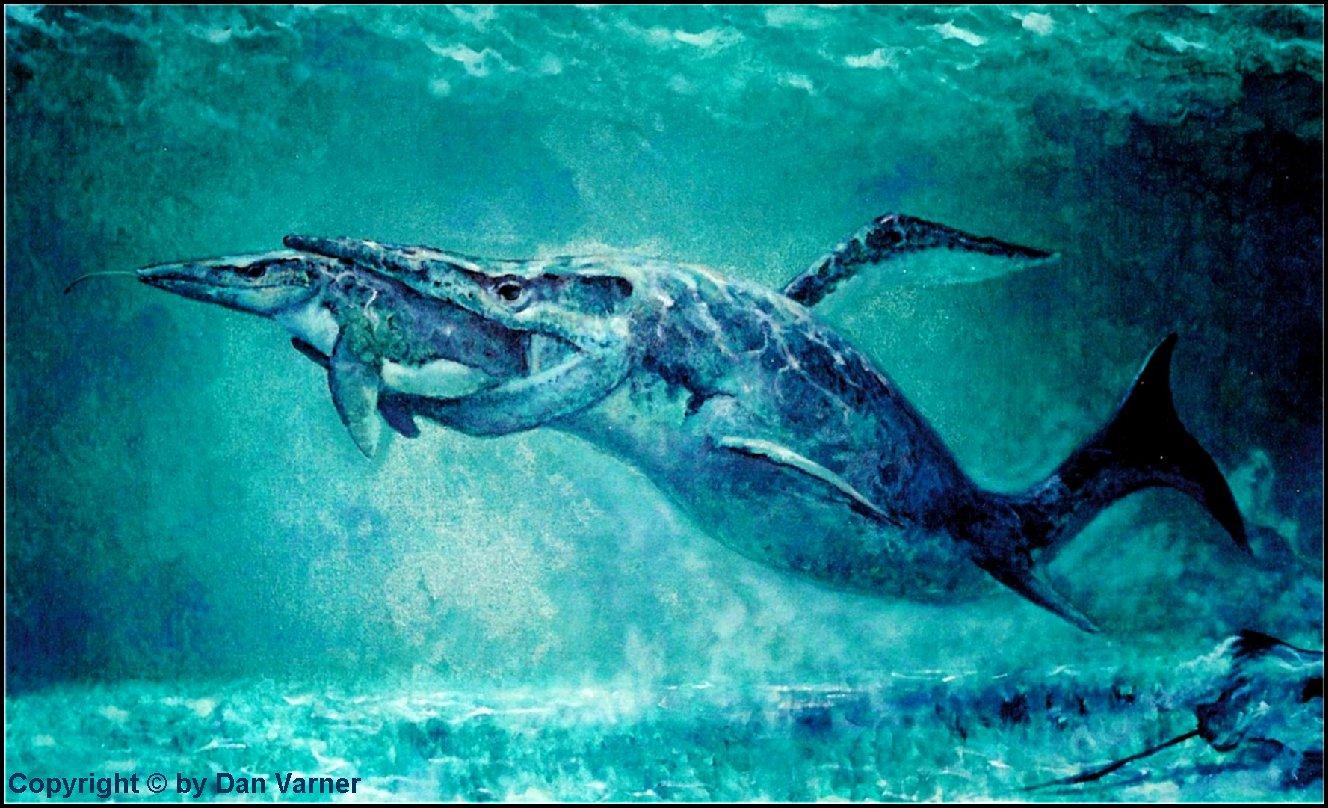 Carnivores And Super Predators Mosasaur Pics