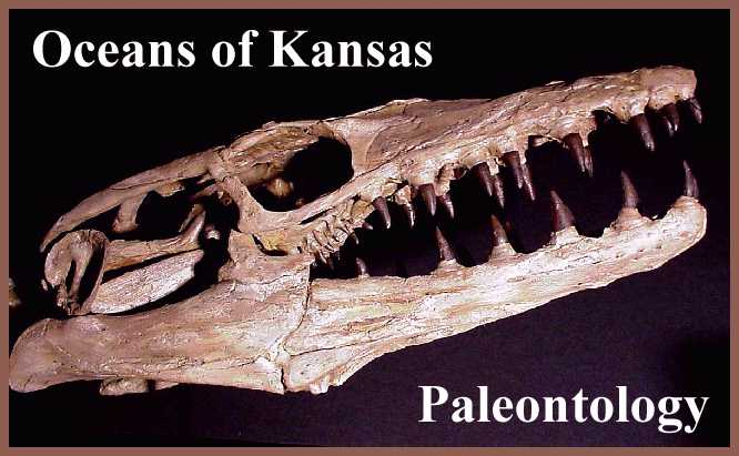 What can paleontologists learn from trace fossils
