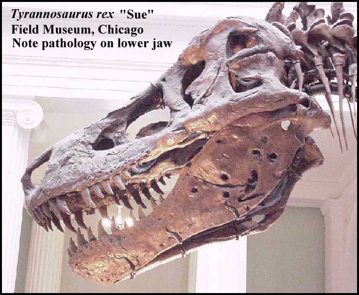 zoids ultrasaurus for sale